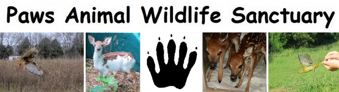 Find a Wildlife Rehabilitator - Paws Animal Wildlife Sanctuary